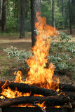 Bonfire fire flames Royalty Free Stock Images