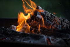 Bonfire. Fire wood. Grilling and cooking fire. Woodfire with flames. Royalty Free Stock Image