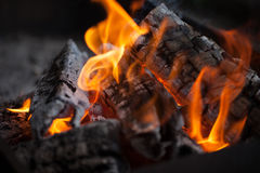 Bonfire. Fire wood. Grilling and cooking fire. Woodfire with flames. Stock Photos