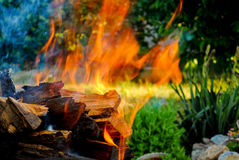 Bonfire fire on wood logs in a barbecue on the grass background Stock Photos