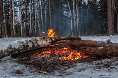 Bonfire firewood forest winter Stock Photo