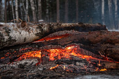 Bonfire firewood forest winter Stock Images