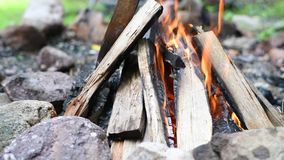 Bonfire flames of camping fire, burning firewood. Beautiful campfire outdoors. Close-up bonfire flames of camping fire, burning firewood. Beautiful campfire stock video footage