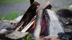 Bonfire flames of camping fire, slow motion burning firewood. Beautiful campfire outdoors. Close-up bonfire flames of camping fire, slow motion burning firewood stock video