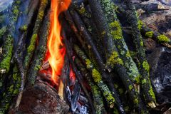bonfire in the forest stock photography