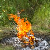Bonfire in forest Royalty Free Stock Image