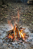 Bonfire in the forest Royalty Free Stock Images