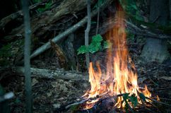 Bonfire in the forest Royalty Free Stock Photography