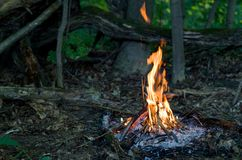 Bonfire in the forest Stock Image