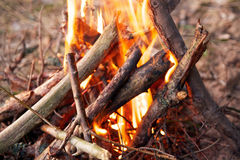 Bonfire  in forest, camp Royalty Free Stock Photography