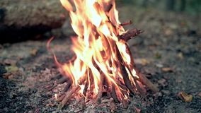 Bonfire in forest close up. Natural light stock video footage
