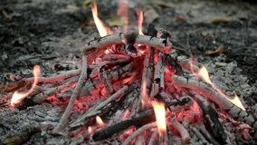 Bonfire in forest close up. Natural light stock footage