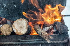 Bonfire in the forest. Royalty Free Stock Image