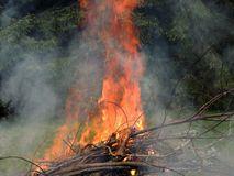 Bonfire on the forest  edge Royalty Free Stock Photo