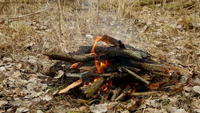 Bonfire in the forest stock video footage
