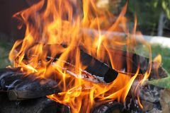 Bonfire in the forest stock images