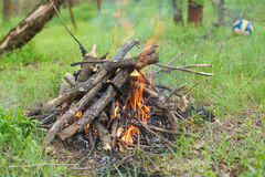 Bonfire in the forest Royalty Free Stock Photo