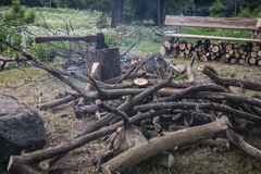 Bonfire in the forest. Making a camp fire from trees and timber in a forest Royalty Free Stock Photo