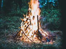 Bonfire on Forest Screengrab royalty free stock photo