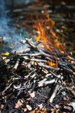 Bonfire in forest Stock Image