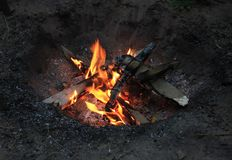 A bonfire in a forest royalty free stock image