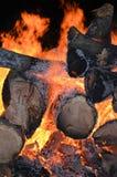 Bonfire Burning Large Trees Night Glow Stock Photo