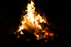 Bonfire in the nature. Stock Photography