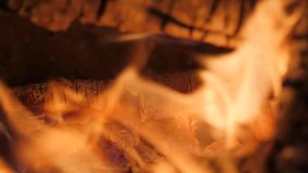 Bonfire at Night Close Up Nature Background stock video