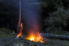 Bonfire at night with flying sparks near lonely pine tree Royalty Free Stock Image