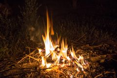 Bonfire in the night forest stock image