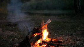 Bonfire at night stock video