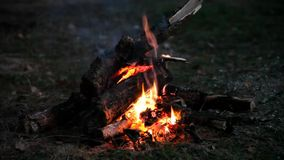 Bonfire at night stock video footage