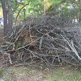 Bonfire Prep. Cut tree branches and limbs form massive pile that begs to be lit Stock Images