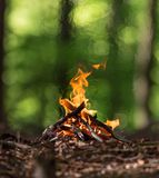 Bonfire in spring forest Stock Image