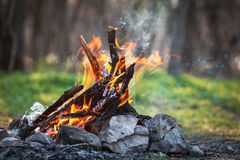 Bonfire in the spring forest. coals of fire royalty free stock photo