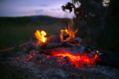 Bonfire with tongues of flame and embers Royalty Free Stock Image