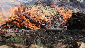 Bonfire with branches close up. Bonfire with tree branches close up burning on meadow stock footage