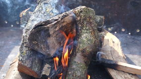 Bonfire trees day smoke stock footage