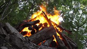Bonfire under the trees in the forest. Big bonfire under the trees in the forest stock video footage