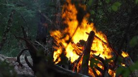 Bonfire under the trees in the forest. Big bonfire under the trees in the forest stock footage