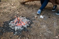 Bonfire warm tourism nature forest concept. Royalty Free Stock Photography