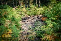 Bonfire in the wild sorrounded by ferns Royalty Free Stock Images
