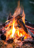 Bonfire. Of wood burning in the evening stock photos
