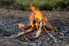 Bonfire. Of wood burning in the forest Stock Photography