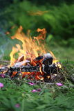 Bonfire in a wood with fern Stock Photography