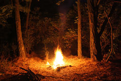 Bonfire in the woods Stock Image