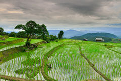 Bong Piang Rice Field bei Chiang Mai, Thailand Stockfoto