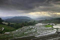 Bong Piang Rice Field at Chiang Mai , Thailand Royalty Free Stock Photography
