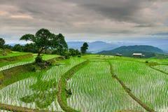 Bong Piang Rice Field på Chiang Mai, Thailand Arkivfoto