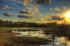 Bonheur de marais Photographie stock libre de droits